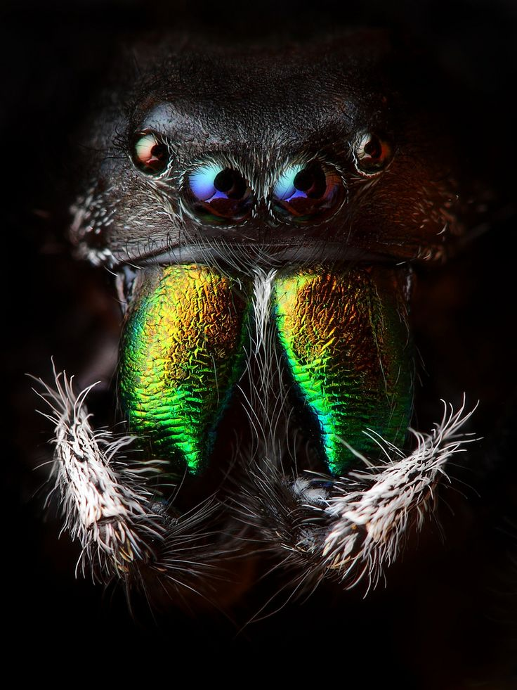 jumping spider. I hate spiders but this is an amazing shot!