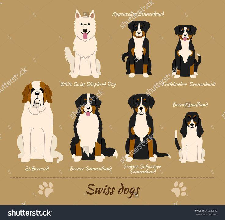 Illustration Von Sieben Verschiedenen Hunderassen Weisser