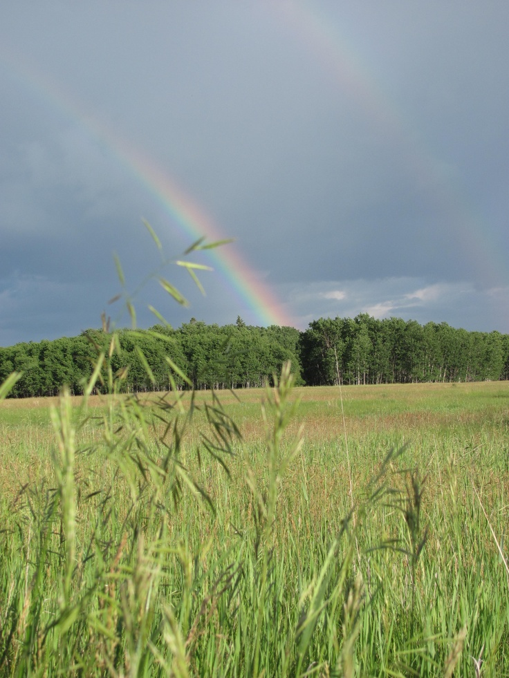 Rainbows and sunshowers, Bird's Hill Provincial Park, MB