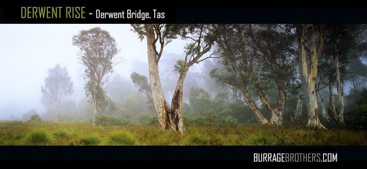 This scene was captured adjacent to the banks of the Derwent River in Tasmania's Central Highlands.