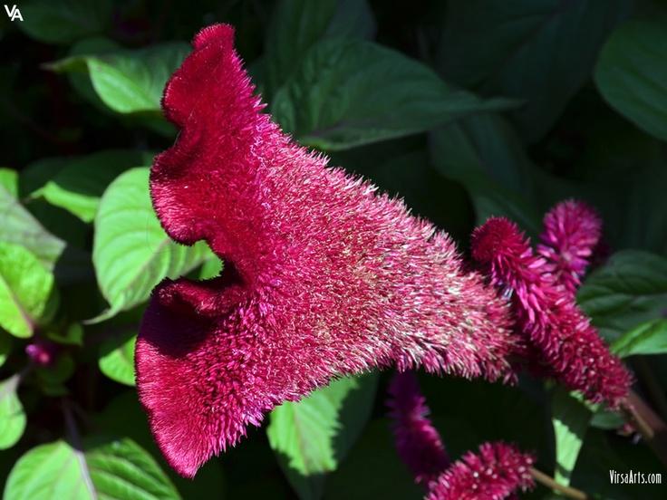 Pink Odd Flower