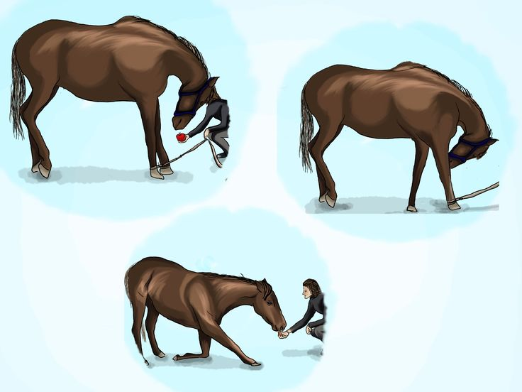 How to Teach a Horse to Bow -- via wikiHow.com