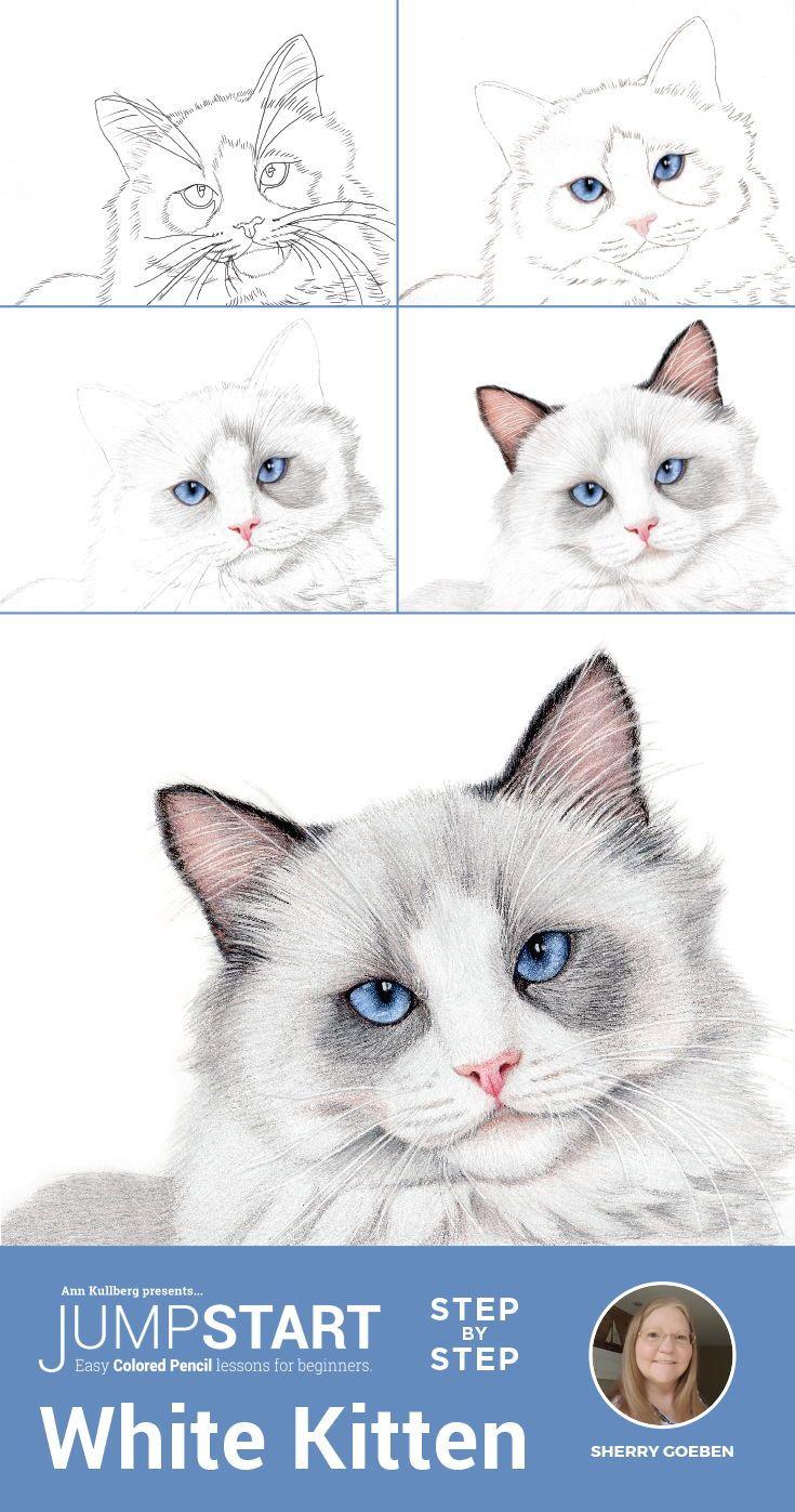 Jumpstart Level 3 White Kitten Kitten Drawing Pencil Drawing Tutorials Cat Drawing