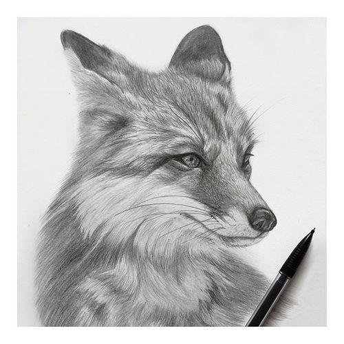 fox pencil sketch | Lenita Pepa