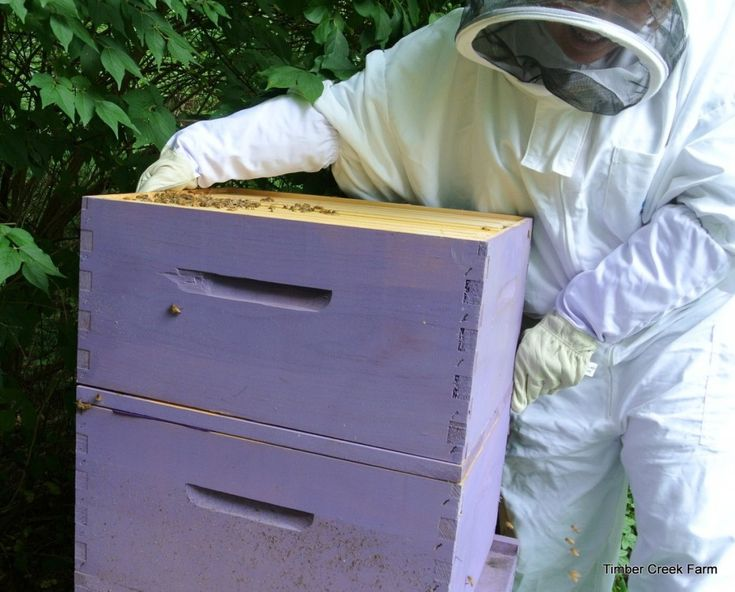 how to keep honey bees: Honey Bee Farming Project Year One