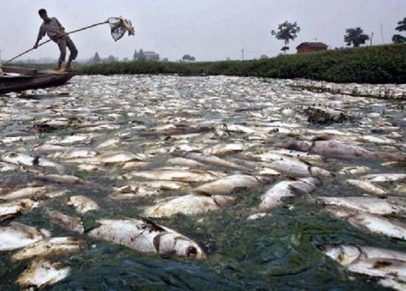 The Most Polluted River In The World – Oddy Central | Shocking News | Weird News | Bizarre News