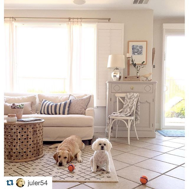 Its important to take everything into context when designing a space. A beautifully designed home even keeps in mind the wants and needs of your pets.