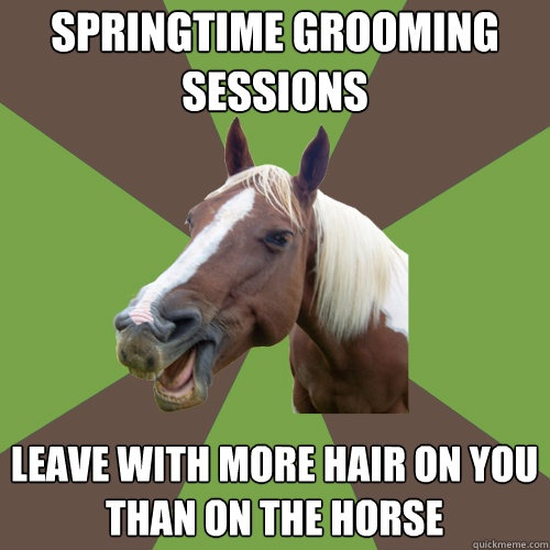 So True I Washed My Horse The Other Day And I Was Covered In Hair Funny Horses Horse Jokes Horses