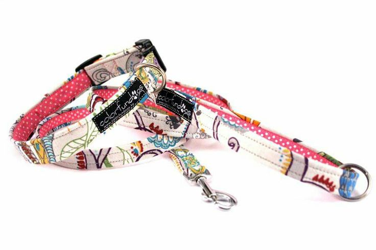 Colorfull normal collar and normal leash. #ColorFunDogs, #colorfundogs