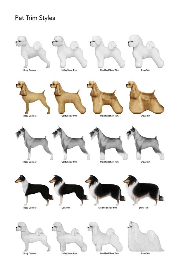 grooming styles pictures