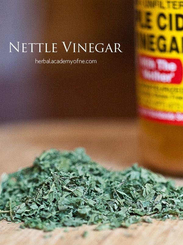Stinging Nettle Recipes for Spring Eating - Nettle Vinegar & more #MyHerbalSpring