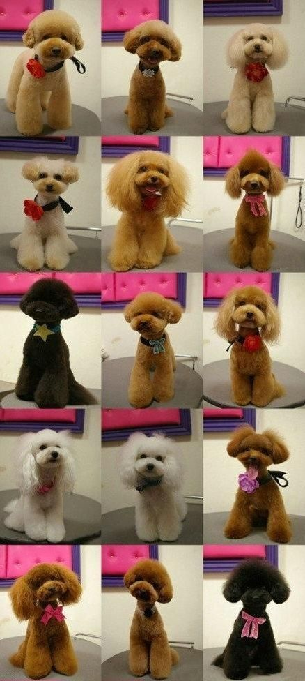 34 best all about dog grooming images on pinterest pets poodles so many styles to choose from solutioingenieria Choice Image