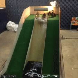 duckling waterslide .... if I ever get ducklings, I must seriously do this.
