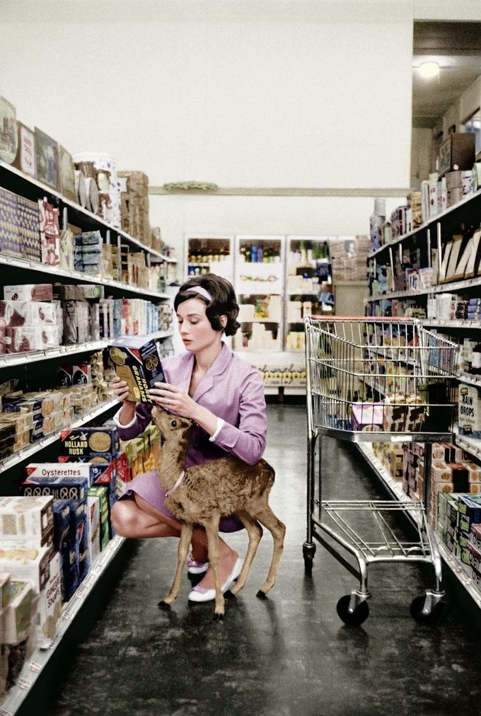 Audrey Hepburn shopping with her pet deer, Pippin, in Beverly Hills (1958)