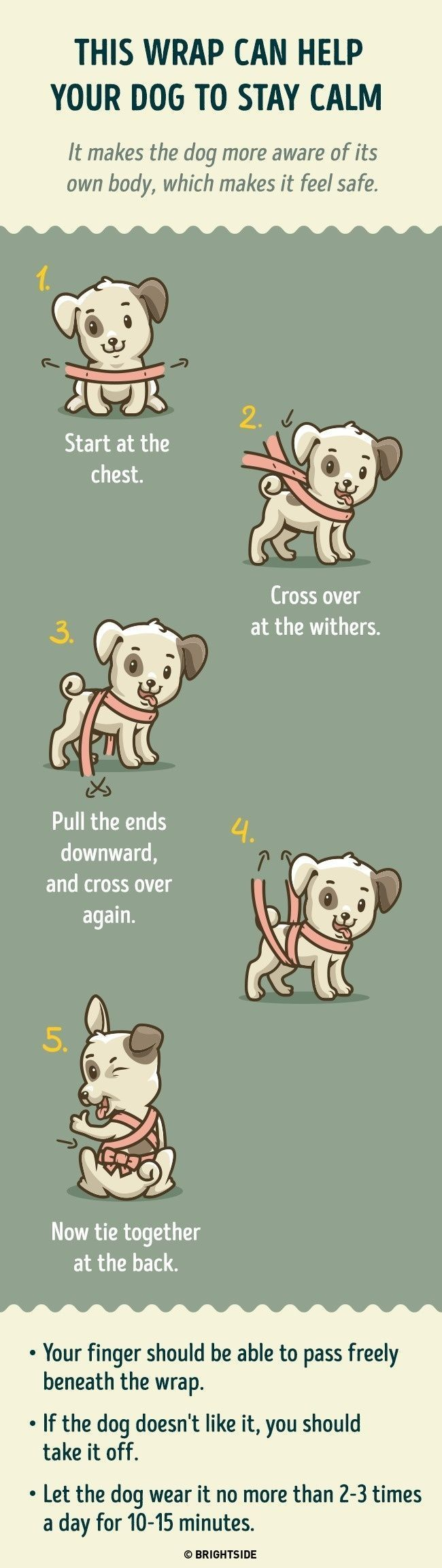 This dog wrapping technique can help keep a dog calm. Especially helpful during storms, fireworks etc