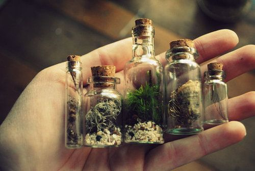 Bottles filled with tiny forest findings.