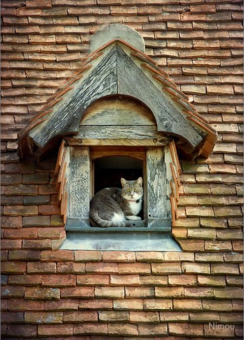 petitpoulailler:  chasingrainbowsforever: Cat on the Roof ~ Photography by Nimou on RedBubble