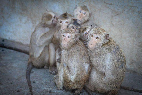BUAV Investigation Reveals Heartbreaking Conditions at Monkey Breeding Farms #video