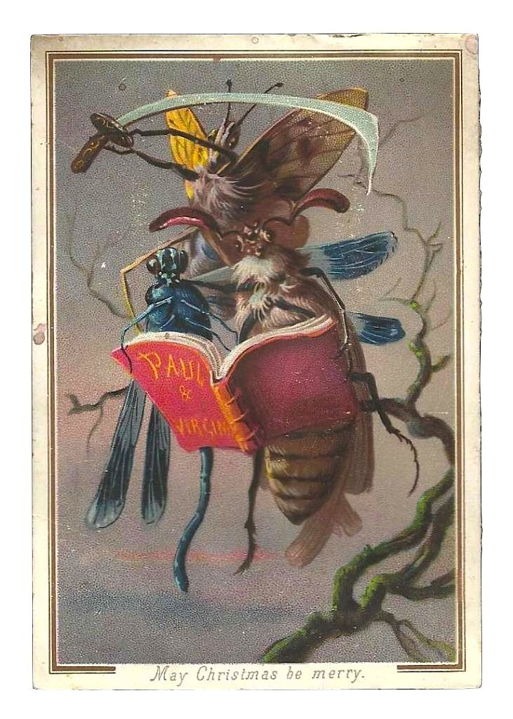 three giant insects reading 'paul et virginie'