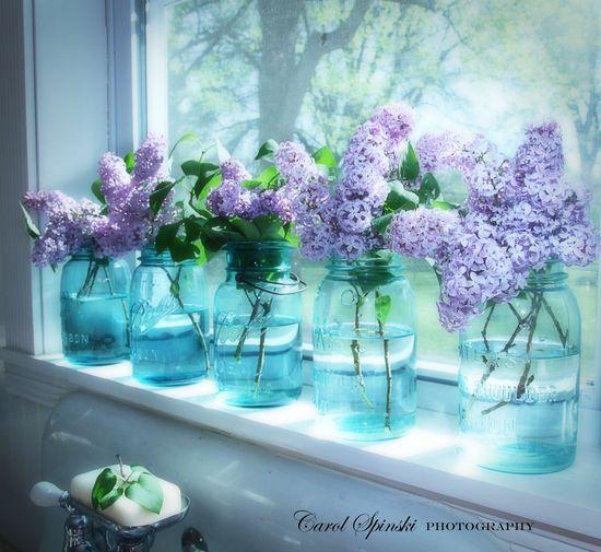Lilacs in blue mason jars on a kitchen windowsill. (Carol Spinski photography.)