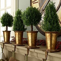 Gold and Evergreen topiaires for stocking hangers