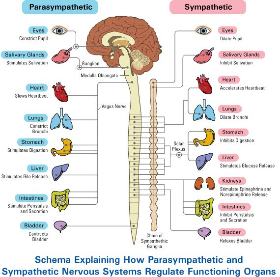 parasympathetic vs sym...