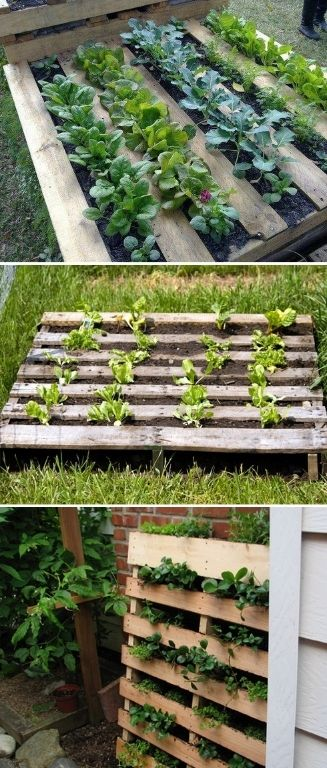 DIY Pallet garden! We've actually done this at the Reel Gardening office, beautiful and practical vertical garden idea!