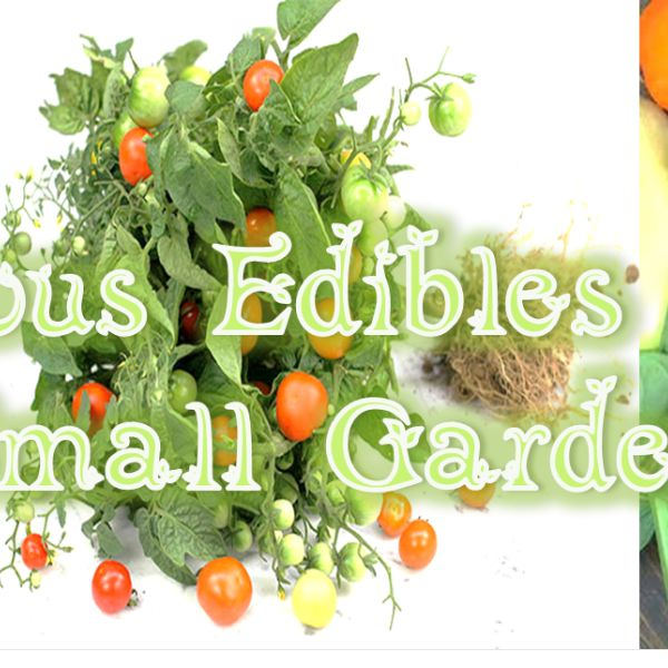 Small Backyard Edible Garden : Edibles for your Small Garden  Garden of Eatin  Pinterest  Small
