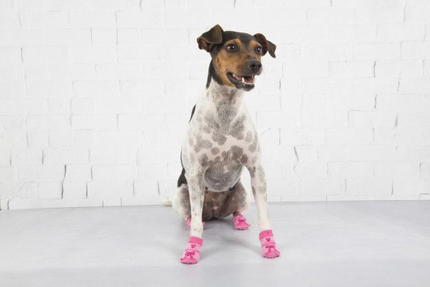 13 best lulupo pet socks images on pinterest athletic dresses 11 cachorrinhos usando meia que vo te lembrar que o mundo lindo fandeluxe Image collections