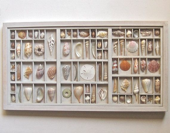seashell art composition in a printers type box by xenasdad, $390.00