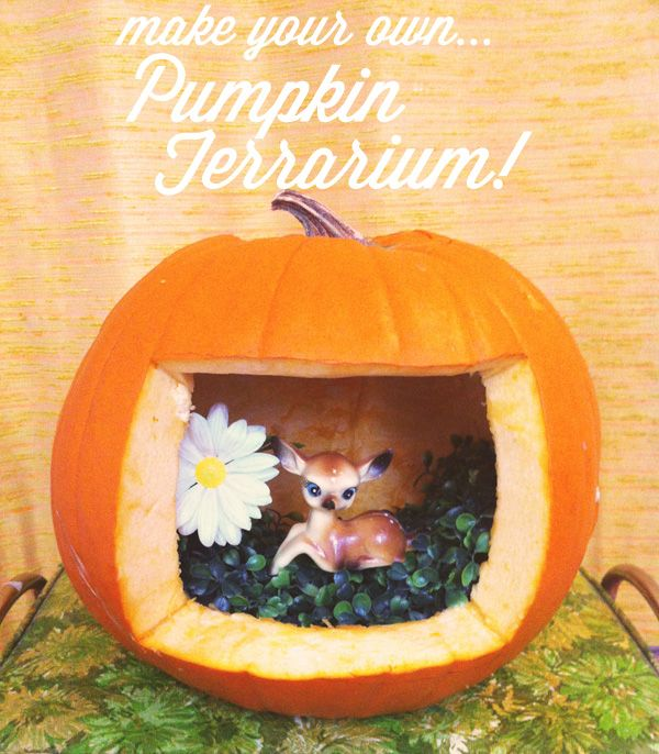 Oh So Lovely Vintage: DIY Pumpkin Terrarium!