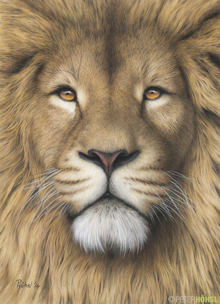 """Leo"" - 29cm x 40cm - colored pencil"