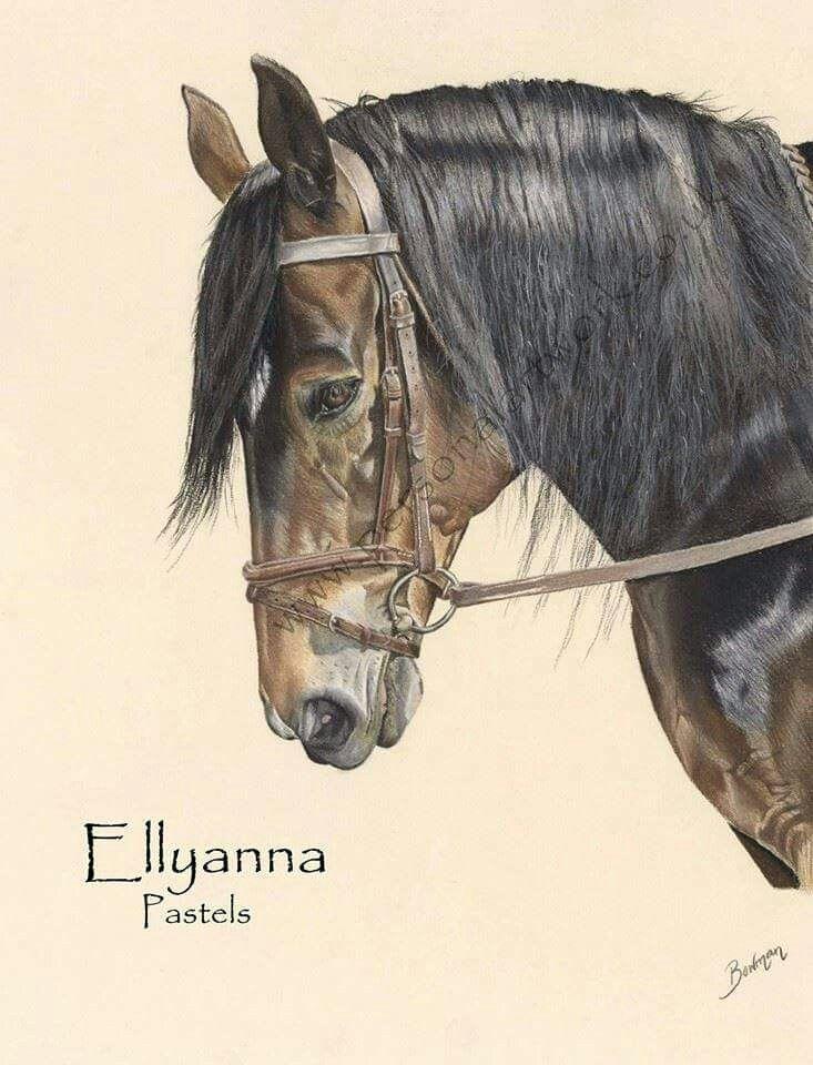 Horse portrait by Katie Bowman www.personalartwork.co.uk