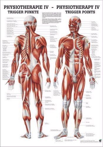 Anatomie is een tak van biologie waarin de structuur van een organisme wordt bekeken. Dit werd geïntroduceerd door Andreas Vesalius. Bron: www.vosmedisch.nl