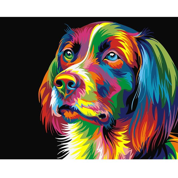 Colourful Dog By Wahyu Romdhoni