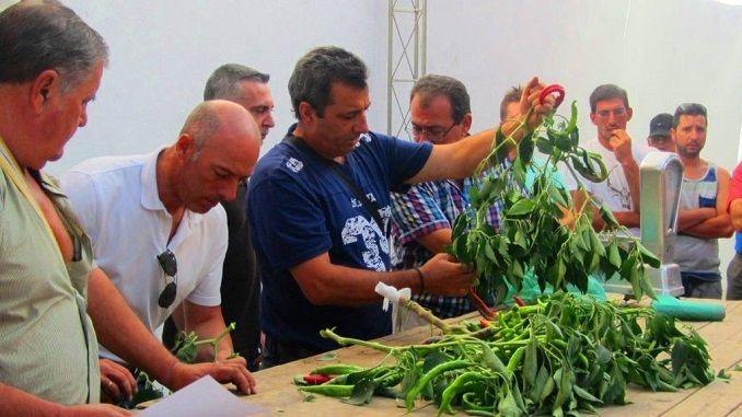 La Concejalía de Festejos se da a conocer el XLIV Concurso del Pimiento y del Tabaco celebrándose el día 11 de Agosto con motivo de las Ferias y Fiestas de Agosto 2017.