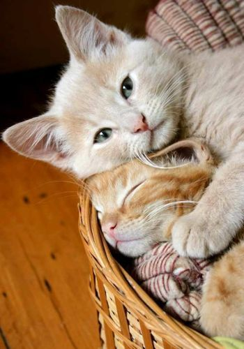love is love: Snuggles, Kitty Cat, Best Friends, Sweet, Baby Animal, Naps Time, Kittens, Cuddling Buddies, New Baby
