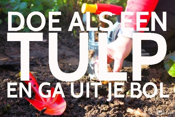 Doe als een tulp en ga uit je bol #ECOstyle #citaten #spreuken