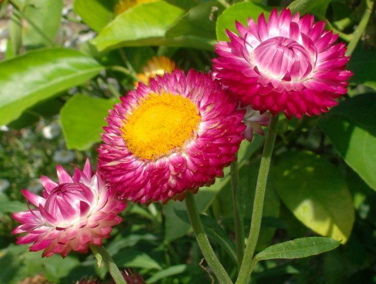 Se você sempre quis ter um jardim florido mas não sabe quais plantas resistem ao calor e tempo quente confira aqui a lista de algumas plant...