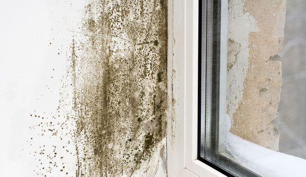 1000 id es sur le th me enlever les moisissures sur pinterest enlever la moisissure noire. Black Bedroom Furniture Sets. Home Design Ideas