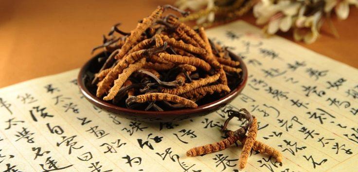 """A Cordyceps sinensis (kínai hernyógomba) számos gyógyhatással rendelkezik. A hagyományos kínai orvoslásban a gombát más tonizáló hatású növényekkel (pl. ginzenggel) együtt porítva, teának vagy alkoholban áztatva és tinktúrának elkészítve alkalmazzák. Elsősorban a hosszan tartó betegség után legyengült szervezet """"energizálására"""" javasolják a használatát. Egyéb hagyományos alkalmazásai: a tüdő- és a vese működésének erősítése, köhögés csillapítása, a tüdők- és a hörgők váladékának csökkentése…"""