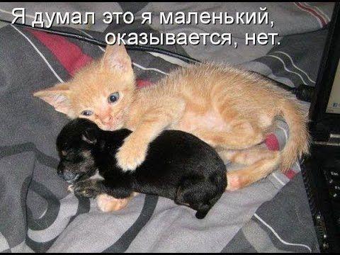 Смешные животные Котята Щенки Обезьяны Лошади Funny animals Kittens Pupp...