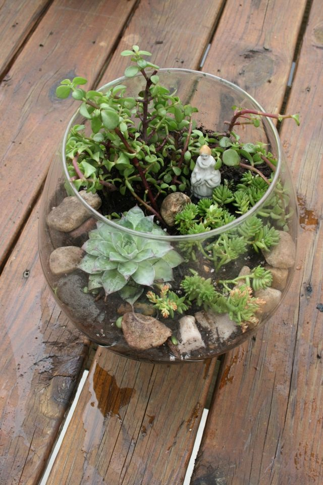 17 best images about upcycled recycled fish bowls on for Fish bowl plants