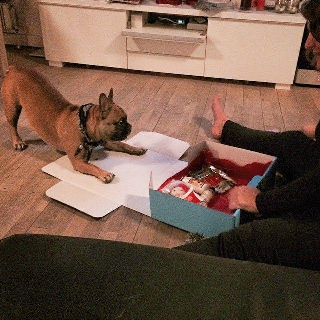 Hugo er helt spændt!!! Tør han se Potebox? Ja indholdet er helt vildt var Hugo? - 1000 tak til Julie for billedet af Hugo. #pote #poter #potebox #fransk #franskbulldog #bulldog #boks #box #kasse #kærlighed #sport #happy #hund #hunde #hjælp #dog #dyr #dogs #dansk #dream #danish #danmark #denmark