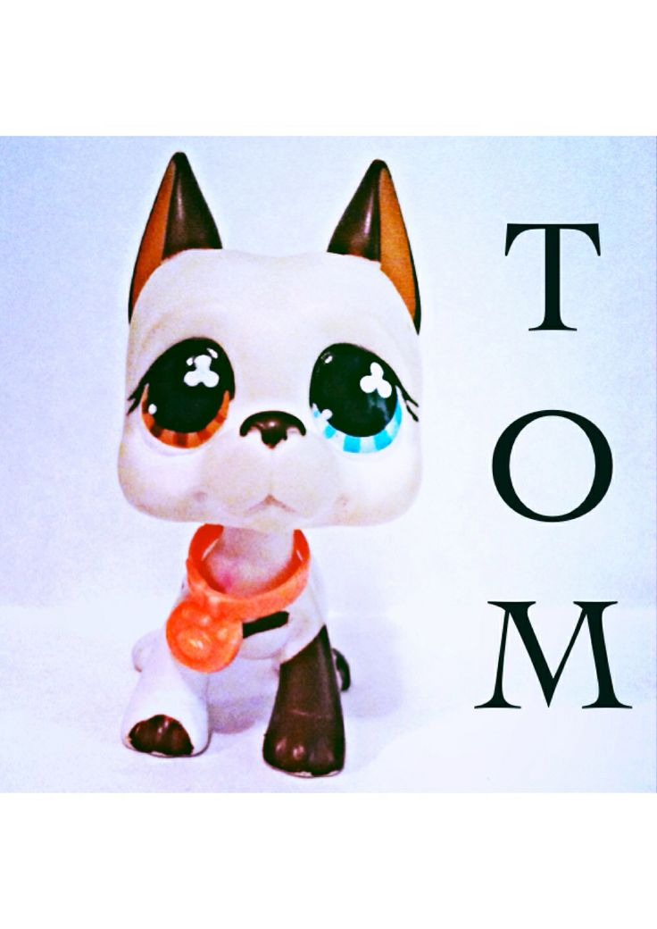 This is my Tom. I have videos of him, I might out them on YouTube and Pintrest. Hope you like this pic, I will put more of my pets on here!!!!!!;-) P.S. I got the name Tom from sophiegtvs hit show LPS:Popular