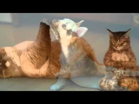Best funny animals yoga ang meditation