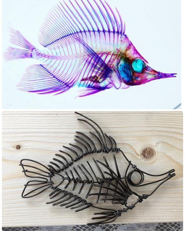 そして短時間で作れるようになってきた。  #骨格標本 #ワイヤーアート #ワイヤークラフト #魚 #フエヤッコダイ #ここばな庵