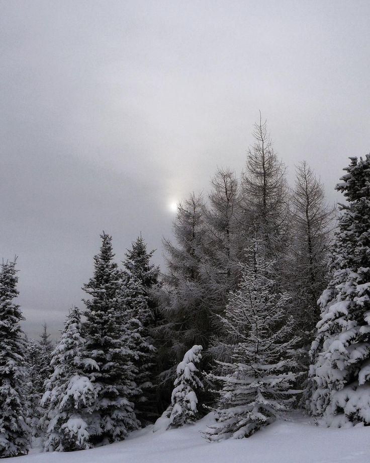 #crosscountryskiing #sport #snow #trip #klubkocestuje #sun #mist Slunce v závoji ❄️⛷#naturelovers
