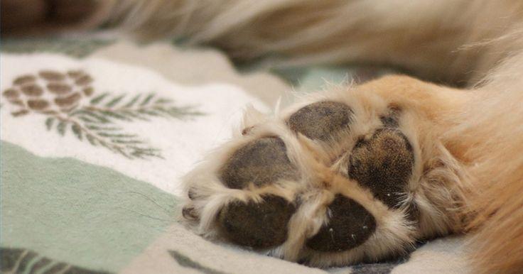 Como fazer reanimação cardio-vascular em cães. A ressuscitação cardio-pulmonar canina (RCP) baseia-se na emulação da respiração e do pulso de um cão em situação de emergência. Saber executá-la pode aumentar muito as chances de sobrevivência do seu amigo nestas condições.