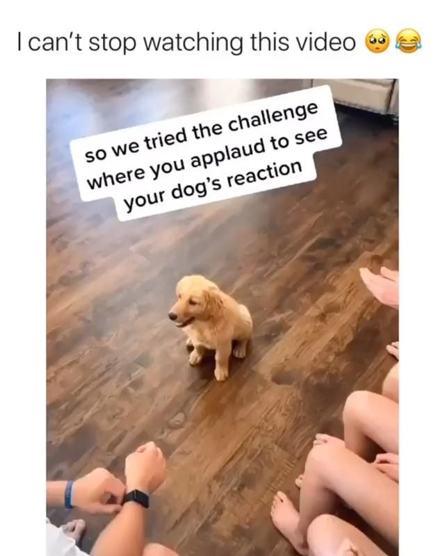 We Love You Lion Via Ig Goldentaiia Source By Dgbreeds Agoldentaiia Cute Dog Cute Dog Memes Cute Dog Video Cute Baby Animals Silly Animals Dog Gifs